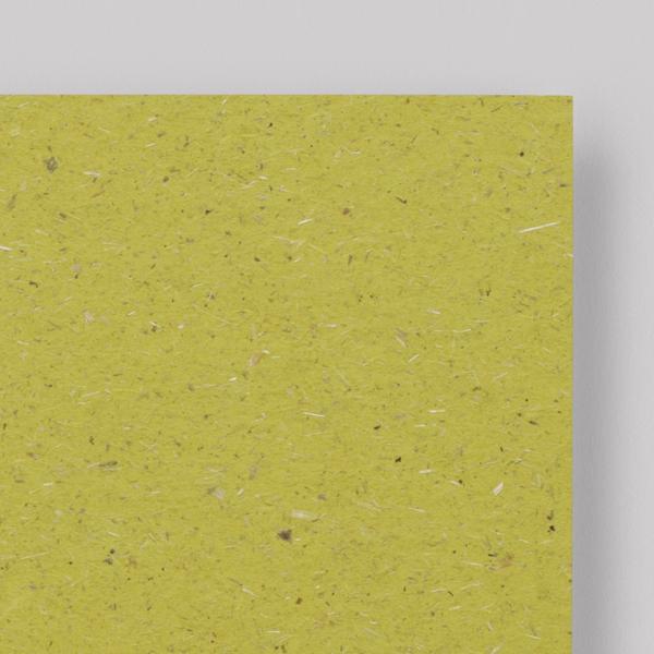 chlorophyll - Blattgrün<br/>